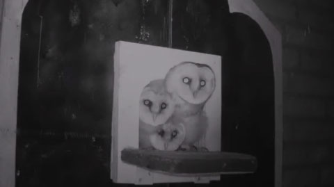 Barn Owl Webcam